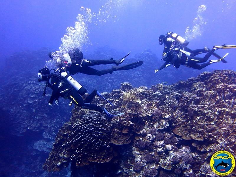 Restore Rapa Nui