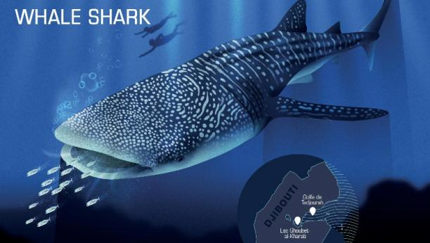 Responsible ecotourisme guideline : Whale sharks