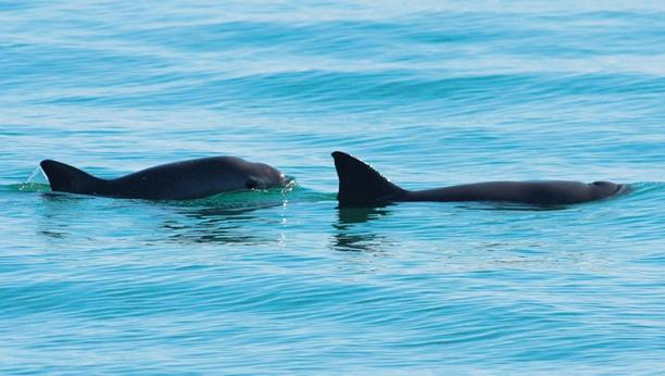 Vaquita Conservation in Mexico