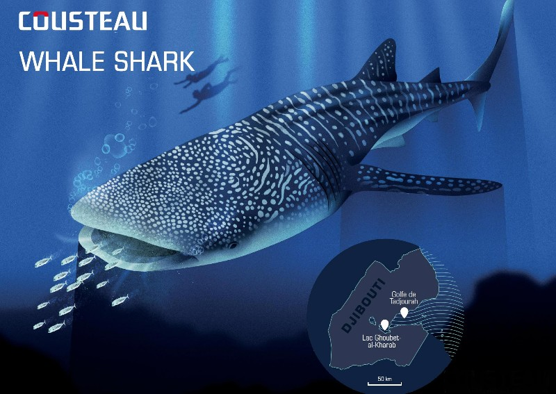Responsible ecotourisme guideline : Whale sharks - The Cousteau Society
