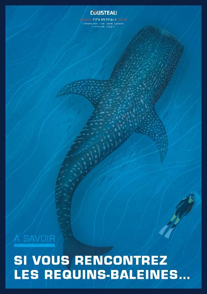 Guide d'écotourisme responsable : Requin-baleine