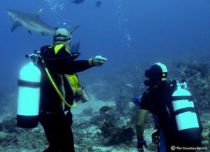 Projet Requins et Raies